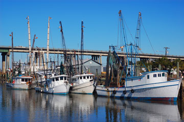 shrimp boats in a Georgia seaport